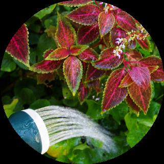 Blumen-Gartenpflanzen-Stauden-Beetpflanzen-Blakonpflanzen-Blumen-Nellessen