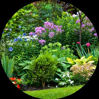 Nettetal-Gartenplanung-Blumen-Nellsen-Gartengestaltung